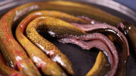 红烧黄鳝的正确做法,营养美味又下饭,老婆一次两条不够吃