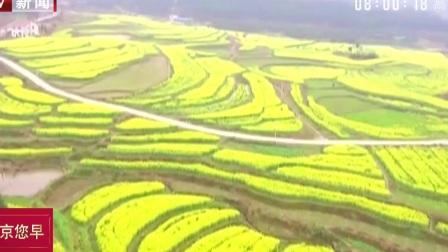 您早 2019 湖南赏花地图:万亩油菜花开  永州双牌打造田园慢生活