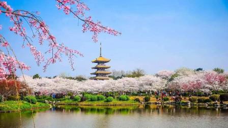 武汉东湖樱园:夜樱像妖艳丽人,日樱像素颜美女,樱花你喜欢哪一种?
