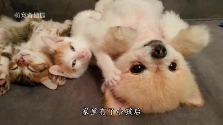 狗妈妈生宝宝太辛苦,狗爸爸心疼亲吻:老婆辛苦了!