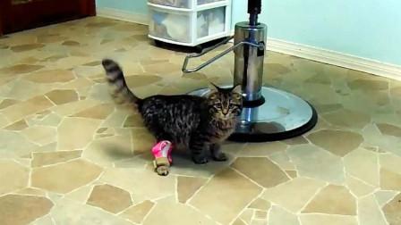 加拿大猫咪天生残疾,装上3D打印的假肢,第一次实现奔跑!
