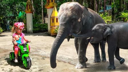 太有趣了!2只大象向小萝莉走过去,它们想干嘛呢?