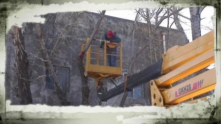 中润物业绿化公司对学府区域树木进行修剪工作