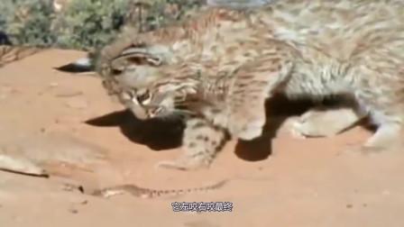 """萌宠:现实版""""猫捉老鼠""""!没想到结局是这样,镜头记录全过程"""
