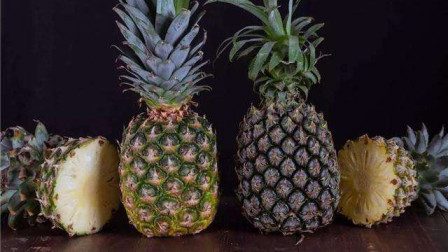 菠萝和凤梨到底有什么区别?看了这视频终于弄明白了