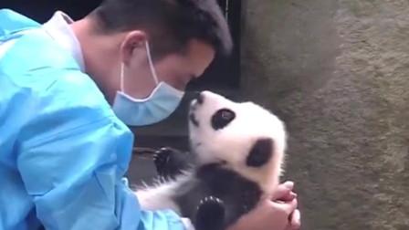 熊猫:大熊猫宝宝与饲养员的日常,一大波猫粮送给你们,就问你酸不酸