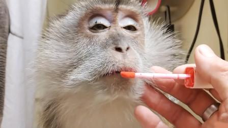 脑洞大开主人把猴子当女儿养,不仅给她化妆还帮她梳头