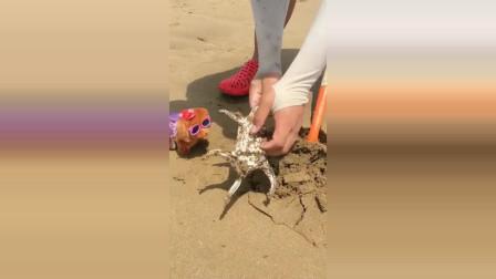 今天在海边有幸挖到一只六角贝