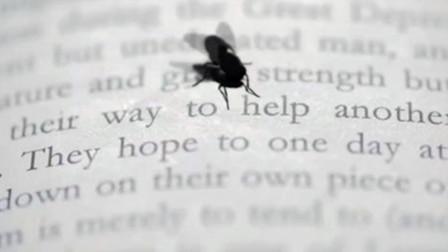 小伙发现一只识字的苍蝇,交流之后,发现了一个可怕的秘密