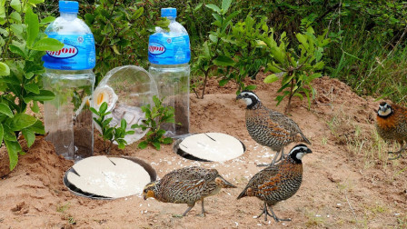 农村小伙用塑料瓶制作捕鸟陷阱,贪吃的小鸟进来就跑不掉!