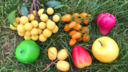 认识龙眼等超级美味水果,乐宝识果蔬