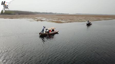 直击白洋淀生态环境治理成效丨这几类鱼的出?#31181;?#26126;水?#26102;?#22909;了!