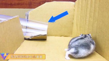 三只仓鼠在纸板迷宫里奔跑