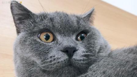 猫的表情变化 纯纪录片