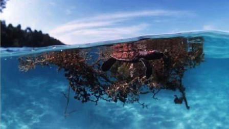 世界最危险的海,无风无浪还能看清海底,却成为无数船只墓地