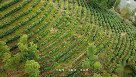 宁国白茶-《寜香溪玉》