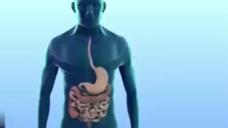 肠蠕动的3D动画演示,说实话看的途中,突然感觉我肚子痒!