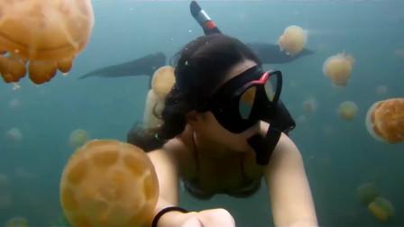 帕劳水母湖的比基尼自由潜水,小姐姐摄影机拍下的镜头,好唯美!