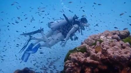 美女潜水遇上鱼群,与鱼共舞的样子美极了!