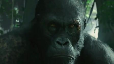 泰山大战猩猩,人与猴的生对决,到底谁更胜一筹?