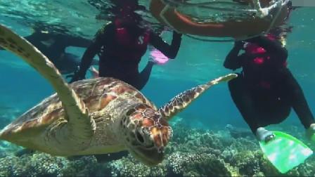 亲身潜入海底,实拍世界最大珊瑚礁,看独霸一方的变性苏眉鱼 优质短节目视频播放平台