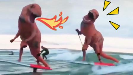 冲浪的恐龙也太魔性了!