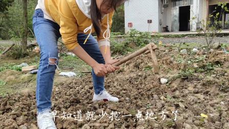 看到别人有花园,农村妹妹把薰衣草和格桑花种一起,能成功吗?