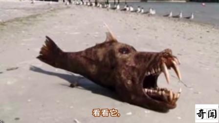 10个在日本海啸后【被发现的奇怪海洋生物】