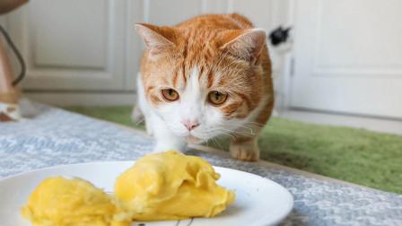 花花与三猫的日常 用微波炉加热榴莲,猫咪集体围观,一开箱猫瞬间逃跑!