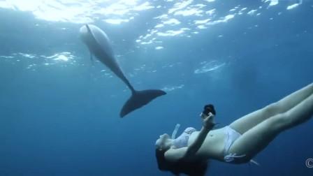 美女自由潜水,漂亮的像条美人鱼,与梦幻海豚相遇共舞