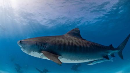 不作死就不会死之与小鲨鱼准备拍照留念, 结局不太完美