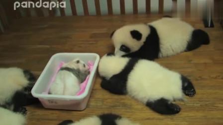 奶妈!这是我好不容易抢购的熊猫,你千万不要给别人哦!