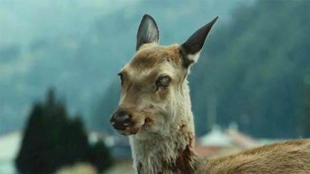 """北美爆发""""僵尸鹿""""到底是什么病,会不会威胁人类?"""