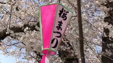 日本东京隅田川樱花
