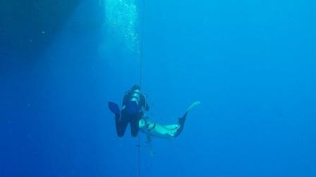 """男子潜水突然遭鲨鱼朝腿上狠咬 """"鲨口逃生""""时同伴拍下惊险一瞬"""