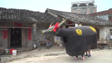贵港市非物质文化遗产:桂平石龙春牛舞