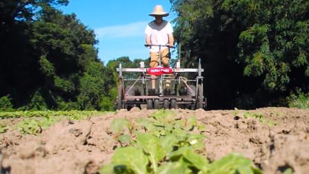 牛人小哥发明这农业小工具,不用油不用电,一天处理10亩地
