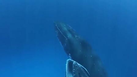 如果人被鲸鱼生吞,活下来的可能性有多大?看完就知道了