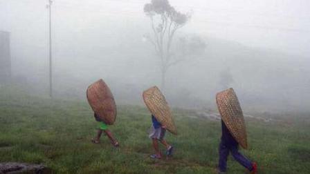 全球最潮湿的地方,全年约325天都在下雨,被子都能长出蘑菇!