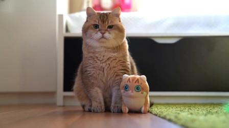 猫咪:不敢动,一觉醒来为啥多了个小喵喵?