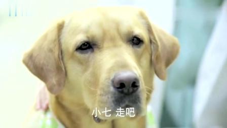 狗妈妈已经死了,狗狗却在手术室外苦苦等了三天,不肯离去