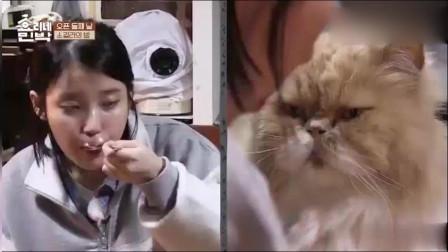三时三餐:IU李知恩吃饭,一只猫咪一直盯着她都馋坏了!好搞笑!