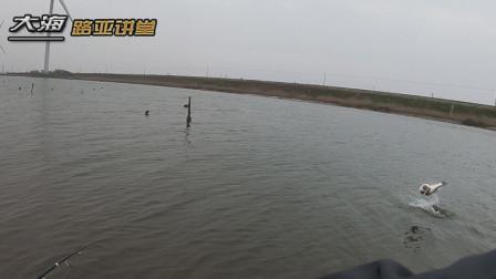 启东春季海鲈鱼