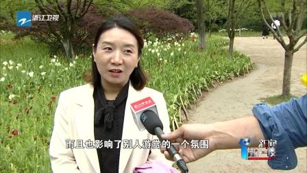 """新闻深一度 2019 杭州太子湾郁金香遭遇""""踩花""""很受伤"""