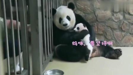 熊猫:大熊猫的母爱,当饲养员拿出一盆蜂蜜,熊猫宝宝的内心是崩溃的