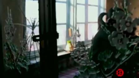 《舌尖上的中国》来看看黄豆酱制作的全过程,看着就觉得美味