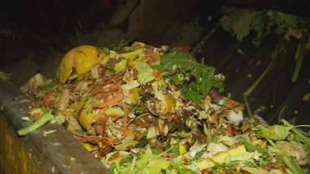 用蟑螂处理垃圾?3亿只蟑螂一天消灭15吨垃圾,你怎么看?