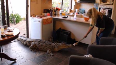 国外女子10年前救了只鳄鱼,鳄鱼为了报恩,用10年做一件事!