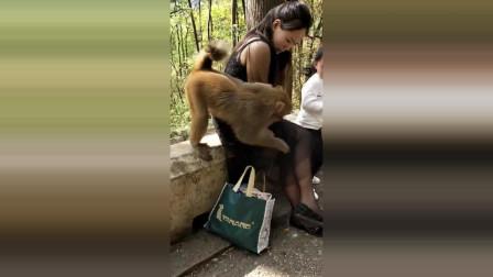 这猴子真是太坏了!竟对身穿短裙丝袜美女做出这种事!把她女儿吓哭了