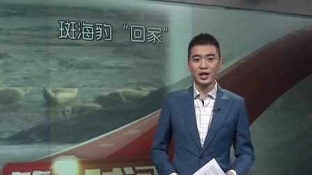 """第一时间 辽宁卫视 2019 让爱回归自然  被盗猎斑海豹""""回家"""""""